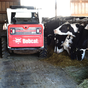 Bobcat S650 skid-steer loader in barn with cows